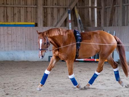Doppellongentraining beim Pferd