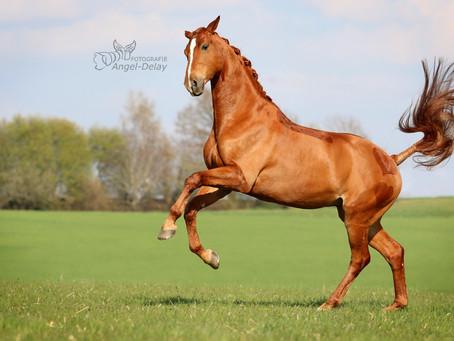 Rumpfträger trainieren beim Pferd