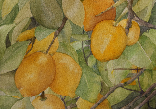 Corfu Lemons