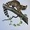 Thumbnail: Planche d'histoire naturelle