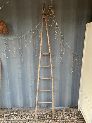 Ancienne échelle de cueillette en bois