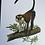 Thumbnail: Planche d'histoire naturelle (singe)