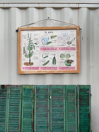 Ancienne affiche scolaire