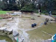 nettoyage bassin