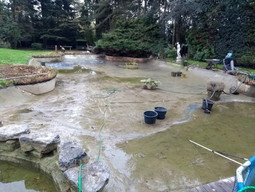 Grand nettoyage  du bassin