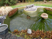 construction bassin aquatique