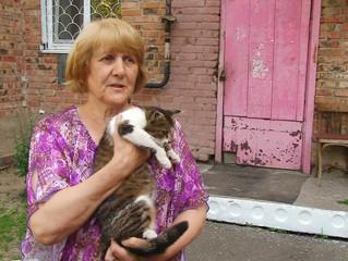 Омичи смогут стерилизовать бездомных животных бесплатно