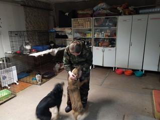 Приют для животных «Хвостатый детский дом» ждет друзей