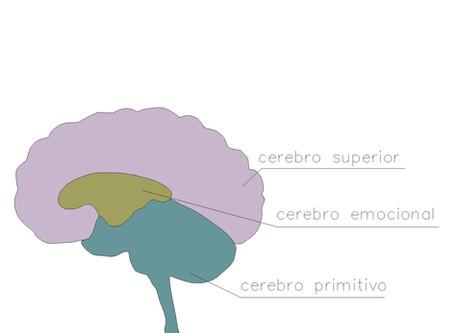 El estrés y el desarrollo neurológico de tu bebé