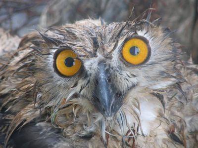 les oiseaux de lac de Paladru