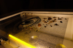 Sérigraphie d'insectes