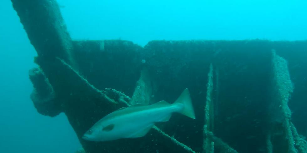 Kyarra Wreck Dive