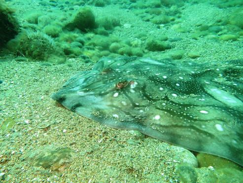 Club Dive - local sightings