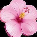 337-3374325_tropical-flower-clipart-trop