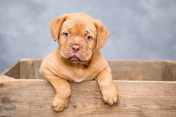 Puppy training- Minneapolis