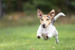 Dog Training-Minneapolis- Minnesota