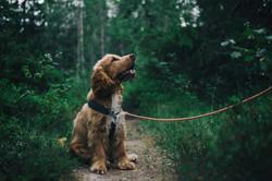 Dog Training-Minnesota