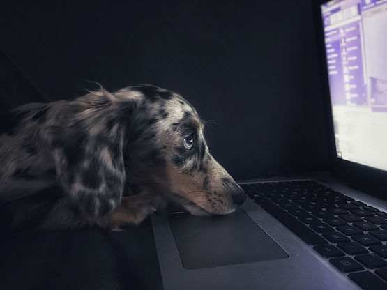 Virtual dog training-online dog training