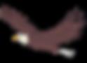 eagle color_edited.png