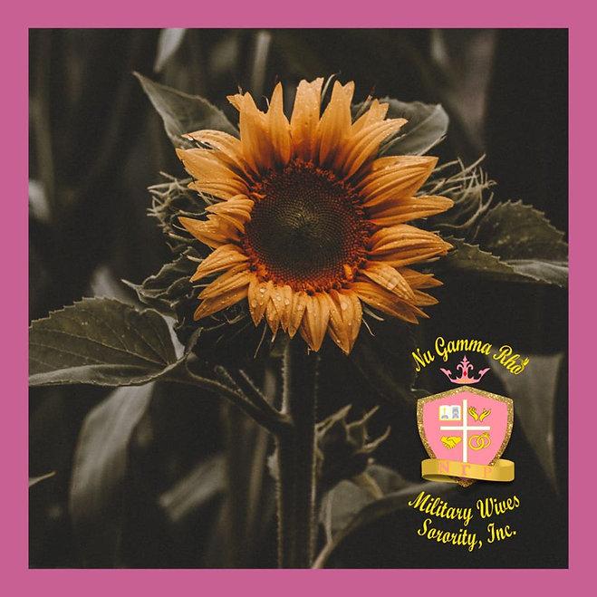 dark sunflower.jpg