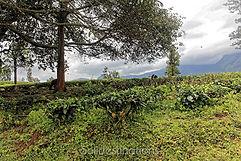 2015.08.Gudalur.Yellamalai_DxO_044.jpg