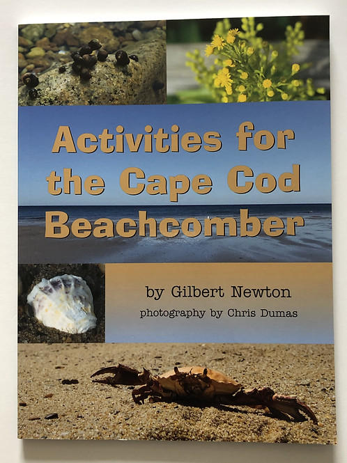 Activities for the Cape Cod Beachcomber