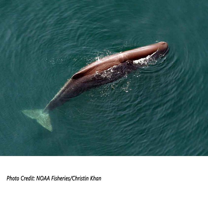 Sperm Whales: Leviathans of the Sea with Kathy Zagzebski