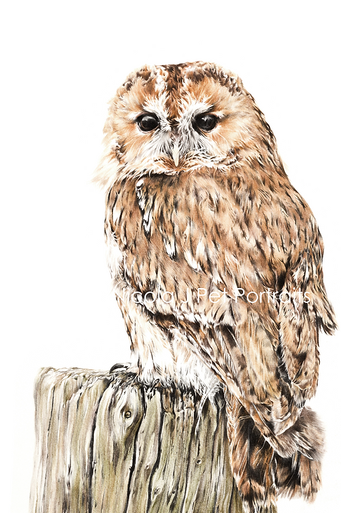 """""""Hooter""""    SOLD"""