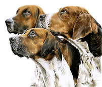 foxhounds 2.png