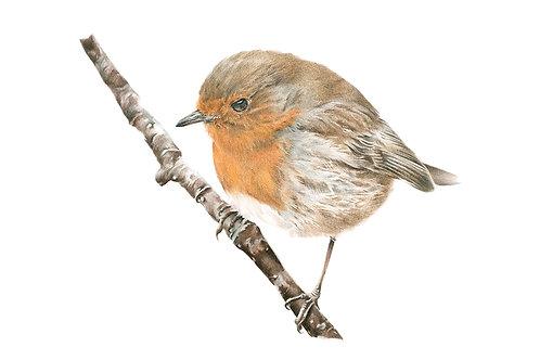 Winter's Warbler ... A4