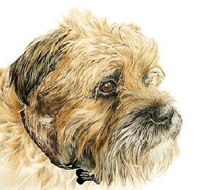 Pet Portrait Artist in Beverley East Yorkshire Pet and wildlife Portraits