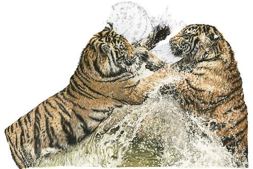 Water Warriors  A4