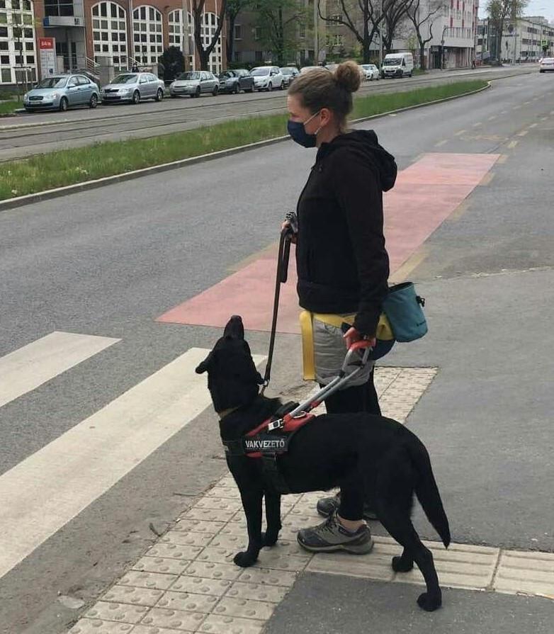 Szőke hajú kontyos nő fekete kapucnis pulóverben és maszkban pórázon fog egy nagy, fekete kutyát egy gyalogos zebra előtt, a kutya felfelé néz rá