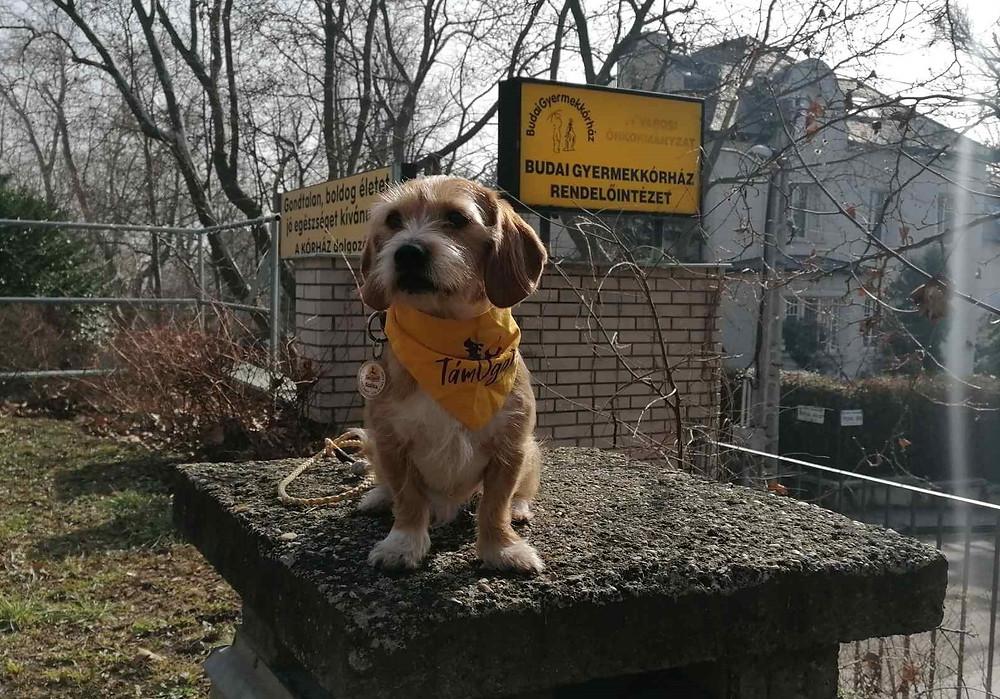 Egy kistestű, világosszőrű kutya sárga kendővel a nyakán egy oszlop tetején ül, a háttérben felirat: Budai Gyermekkórház Rendelőintézet