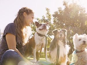 Dog Walker at the Park