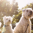 Liz Golborne, qualified dog behaviourist in Leeds - helping you achieve a well-balanced dog