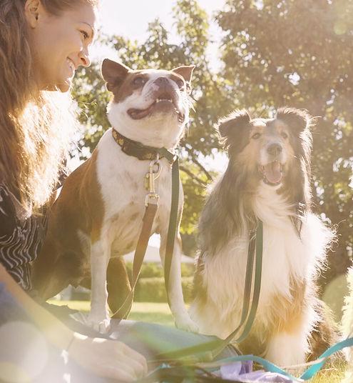 modern dog behaviourist in Leeds - Cookridge Canine Care