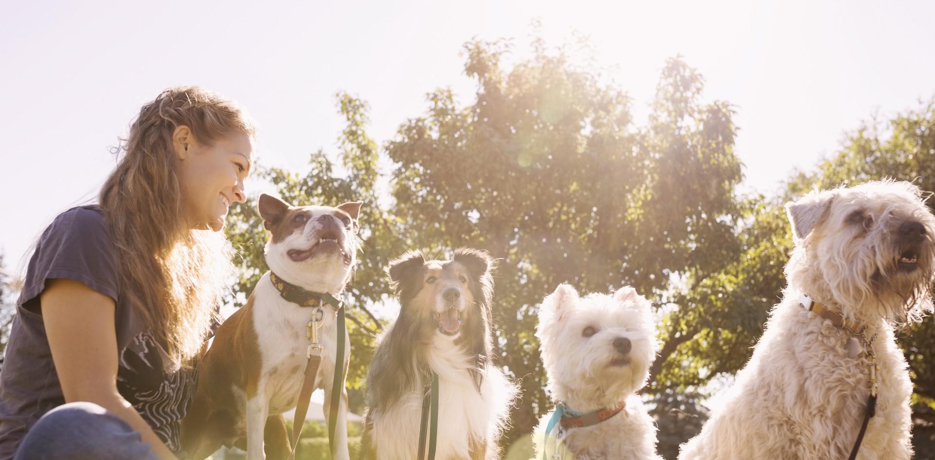 Dog Sitter - Pension