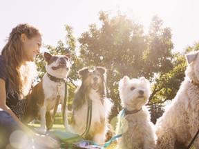 A Missão Espiritual que seu cão tem em sua Vida
