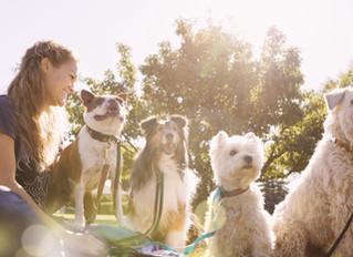 5 razões pelas quais os cachorros são ótimos para a saúde humana