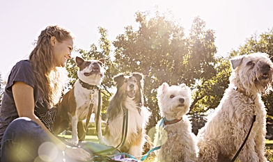 Dog walker with 4 dogs will pick up less poop with f=dogs on our vet approved food.