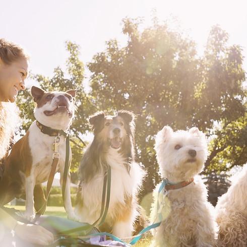 Pups & Pints!