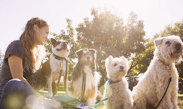 公園で犬ウォーカー