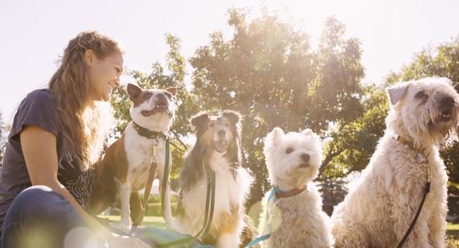 Regras para quem quer ter um cão no Canadá (parte I)