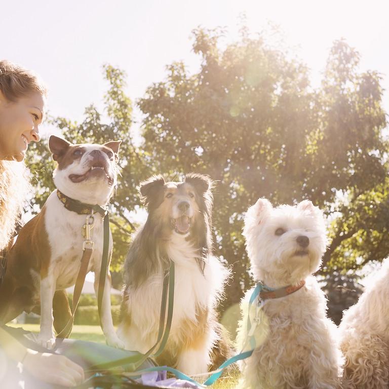 Marina Dog Park Social