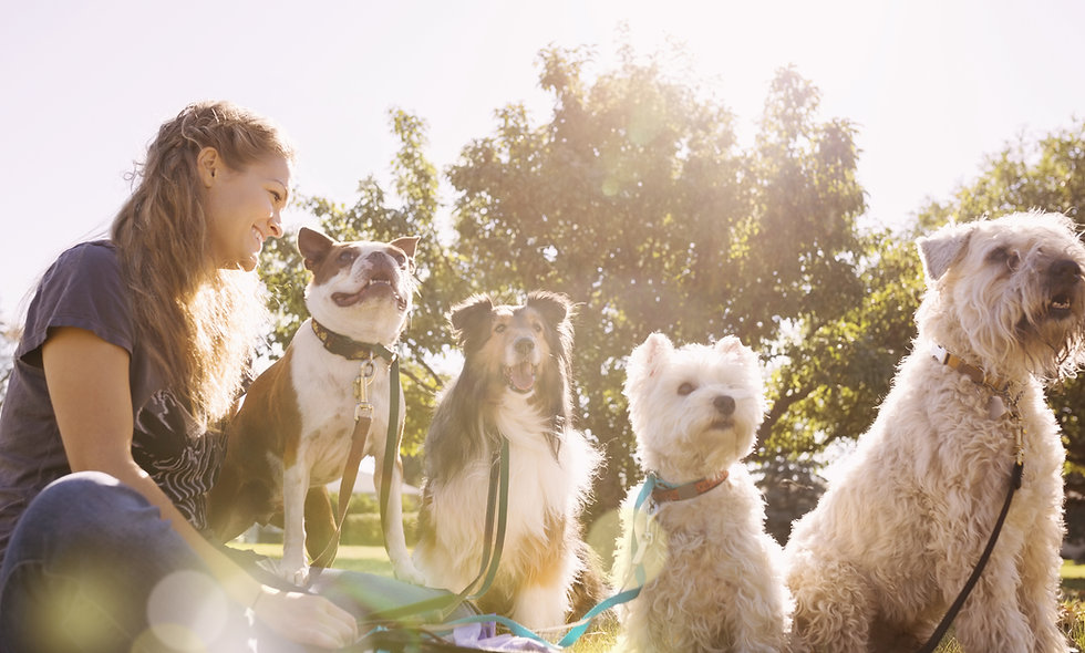 Hundebetreuer Lehrgang