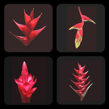 Flowers of Hawaii Coasters Set of 4