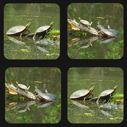 Turtles on a Log Coaster Set of 4