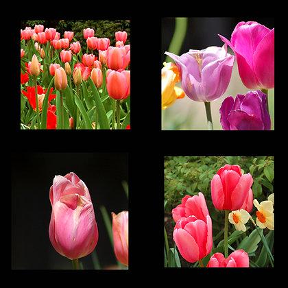 Tulips Coaster Set of 4