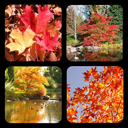 Fall Leaves Coaster Set of 4